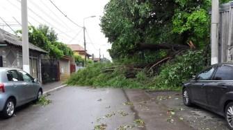 Mai mulți copacii au căzut pe strada Verde din municipiul Constanța. FOTO Anelise Dinu