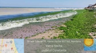 Algele au invadat litoralul. FOTO ABADL