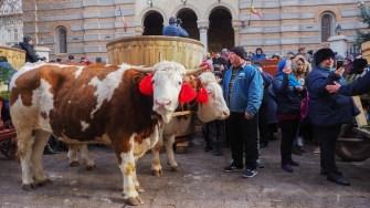 Boboteaza din anul 2019, la Constanța. FOTO Cătălin Schipor