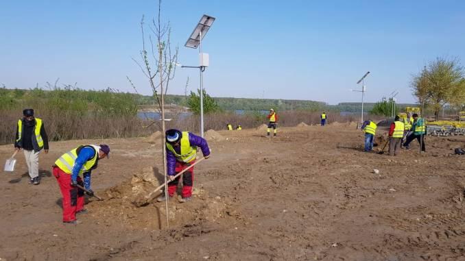 Plantări de primăvară în zona Via Verde din Cernavodă. FOTO POC