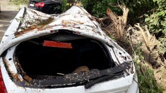 Mai multe mașini au fost grav avariate în urma căderii copacilor. FOTO CTnews.ro