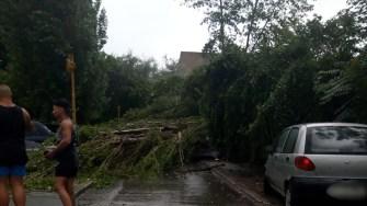 Copacii rupți sau smulși de vijelie au fost aruncați pe carosabil, mașini și cabluri. FOTO Cătălin SCHIPOR