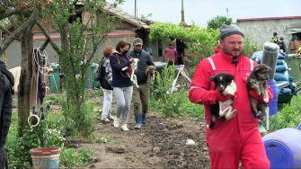 """Adăpost improvizat pentru animale din satul General Scărișoreanu, """"vizitat"""" de polițiștii constănțeni"""