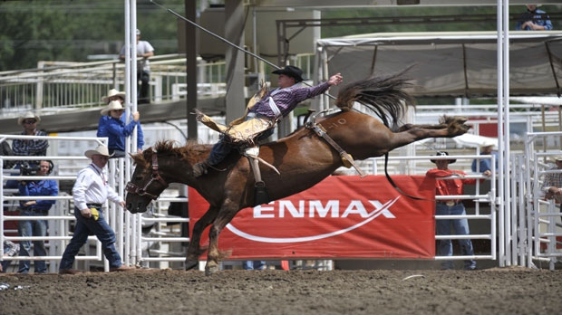 Last Rodeo For Legendary Stampede Bucking Horse Ctv News