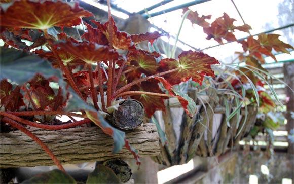 Exposición de plantas de diferentes especies en el Orquideario de Soroa en Pinar del Río, uno de los sitios de visita obligada por su belleza. AIN Fotos: Abel Padrón Padilla