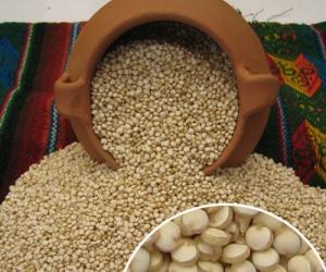 """la Quinua, denominada el """"oro de los Incas"""", se ha convertido en este siglo XXI en el cereal más apreciado en el mundo, por sus grandes valores nutritivos."""