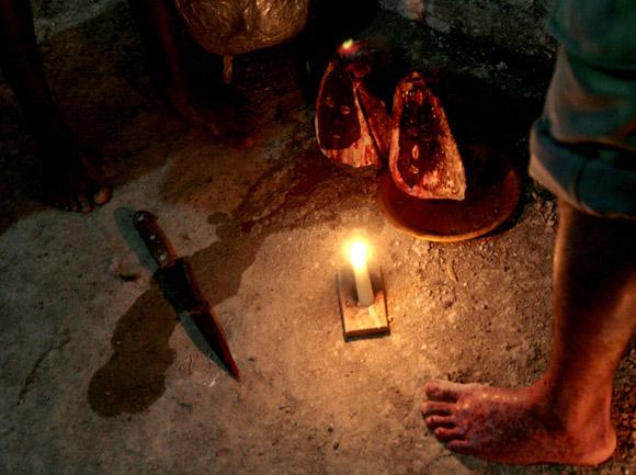 Sacrificion de animales,  en rayamiento, que es la ceremonia de iniciación en la religión de Palo Monte Mayombe. Foto: Ismael Francisco/Cubadebate.
