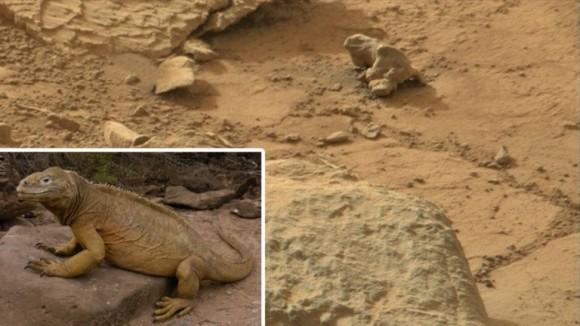 foto iguana Marte
