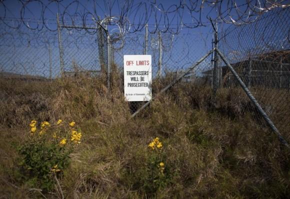 Las malas hierbas y las flores crecen cerca de la valla en Camp X-Ray.  Foto: Bob Strong/ Reuters.