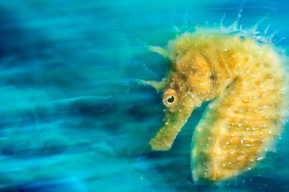 Esta fue la imagen ganadora del concurso de fotografía subacuática 2015. Fue tomada en la región del Trieste, en Italia. Foto: Davide Lopresti.