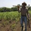 Agricultura, Cuba_foto tomada de internet