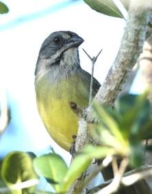 E. Zapata Sparrow