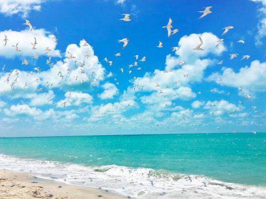 Playa Bahamitas lugares turisticos de campeche