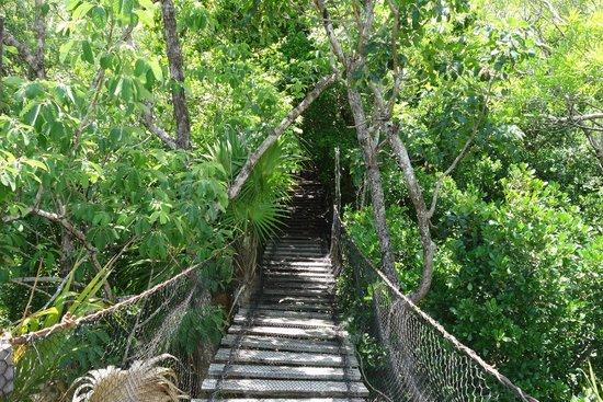 Jardín Botánico puerto morelos