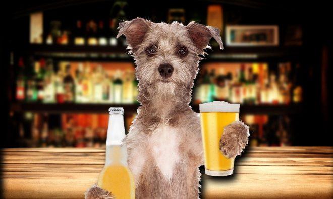 alcohol bebids que no debe consumir tu lomito
