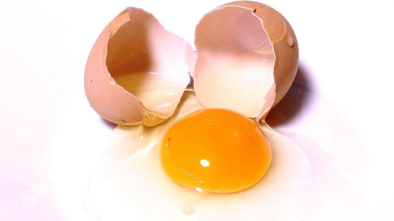 huevos crudos alimentos que causan problemas de salud en tu perro