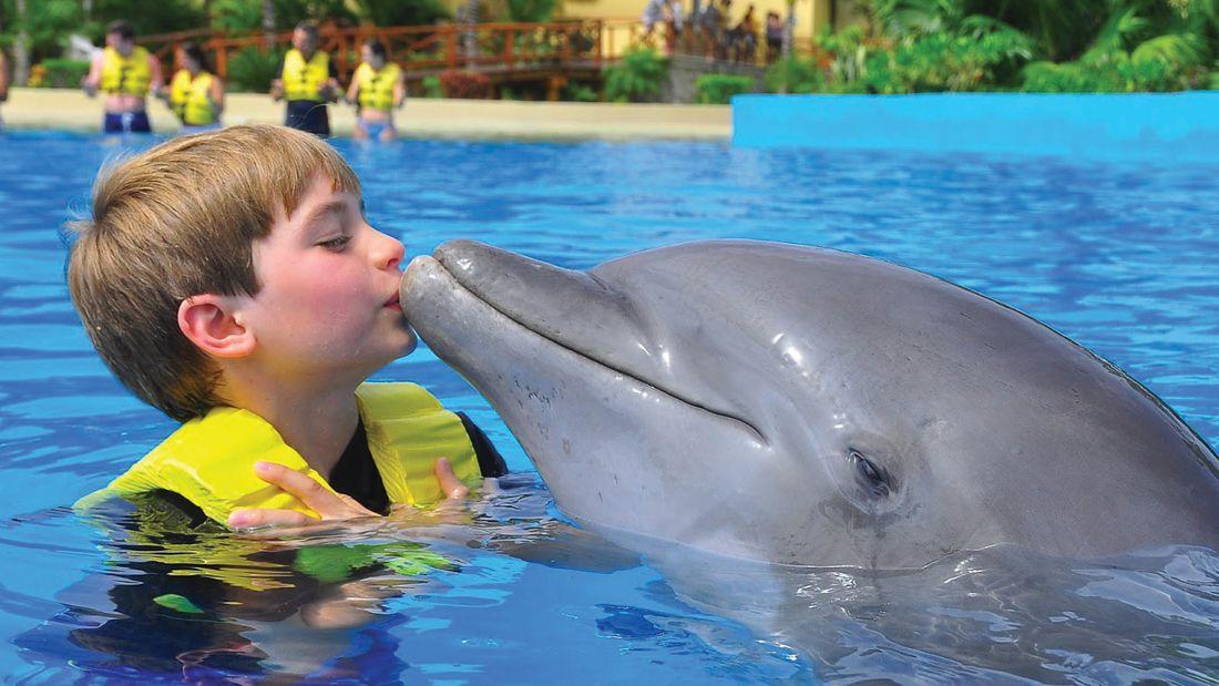 nado con delfines ventura park cancun