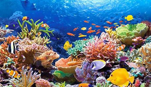 Arrecife Mesoamericano de cancun jungle tour