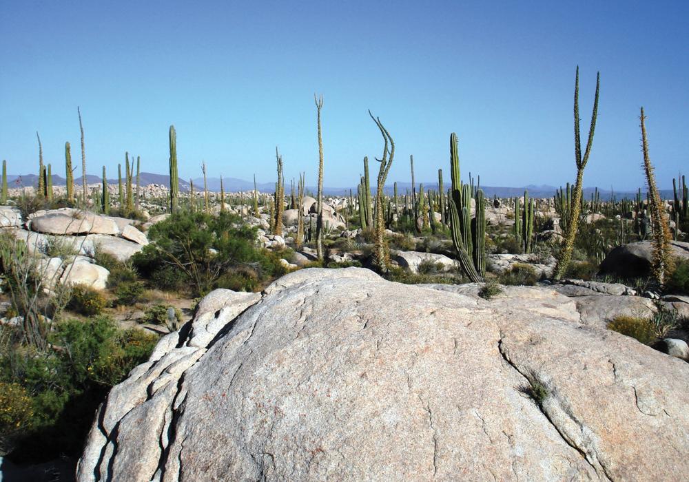 Valle de los Cirios baja california norte