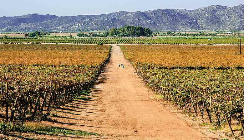 ruta del vino valle de guadalupe