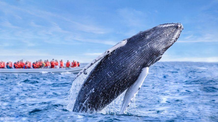 Avistamiento de las ballenas que hacer y ver en los cabos