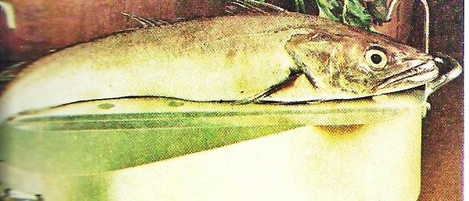 Pesce bollito e pesce salsato scuola di cucina