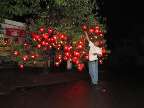 Colocación de farolitoen en un árbol, Ahuachapan. (Fotografía: www.periodicoequilibrium.com)