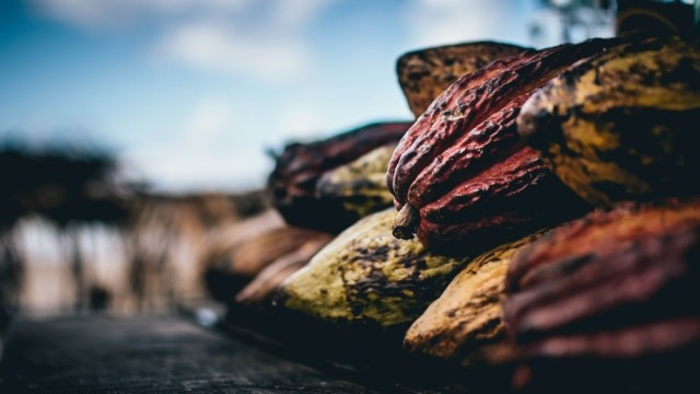 Reshaping The Future of Cocoa in Ghana After COVID-19
