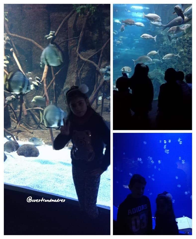 Algunos de los más de 30 acuarios que hay en el Aquarium de Donosti
