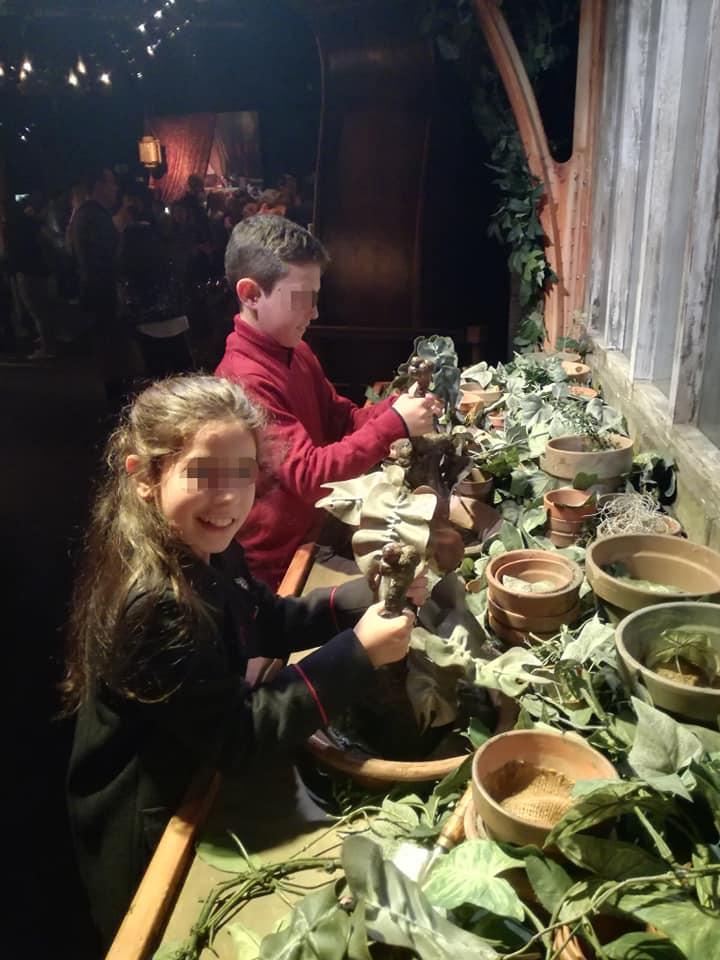 Durante la exposición de Harry Potter podremos recolectar Mandrágoras