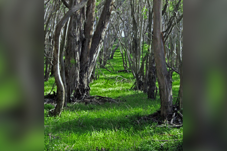 Montana de Oro is home to winding forests.