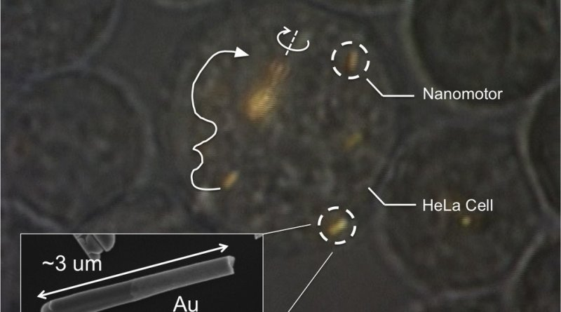 Nanomotores dentro de célula