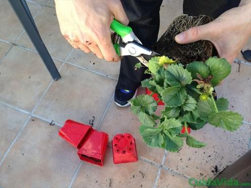 diy-huerto-fresas-arreglar-plantas