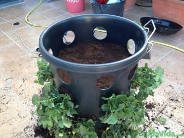 diy-huerto-fresas-ultima-planta