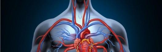 Cómo mejorar nuestra circulación sanguínea
