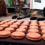macarons chocolat clementine prepa 4 - Macarons chocolat et clémentine