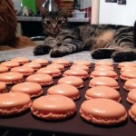 macarons chocolat clementine prepa 5 - Macarons chocolat et clémentine