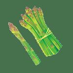 asperge - Dossier : Fruits et légumes de saison au mois d'avril