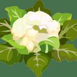chou fleur - Dossier : Fruits et légumes de saison au mois de mars