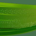 courgette - Dossier : Fruits et légumes de saison au mois d'août