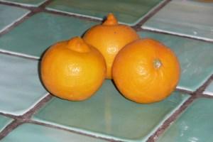 Mousse au chocolat aux citrons bergamote (1)