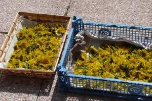 Gelée de fleurs de pissenlit (7)