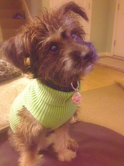 dog sweater 7