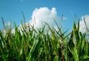 Corte mantiene prohibición en siembra de maíz transgénico