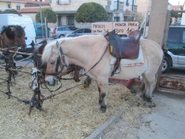 Feria Agroganadera 3