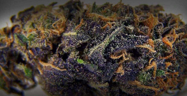 imagem ilustrativa da strain Blueberry
