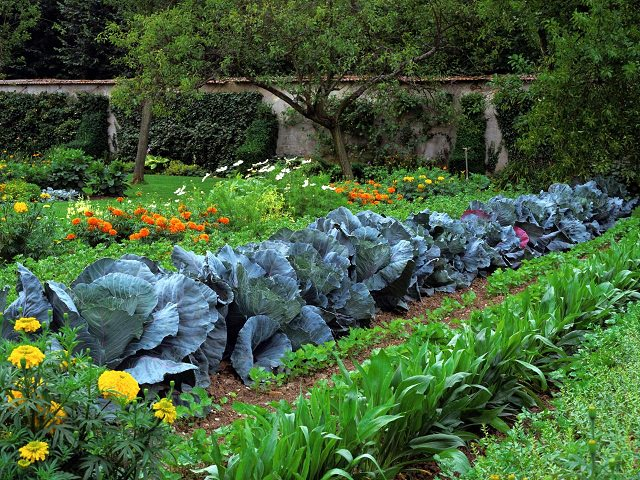Image result for productive vegetable garden