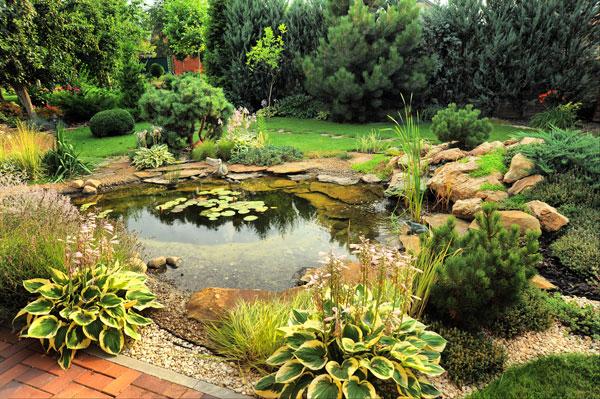 Etang de jardin