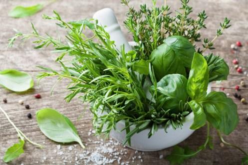 Herbes aromatiques cuisine