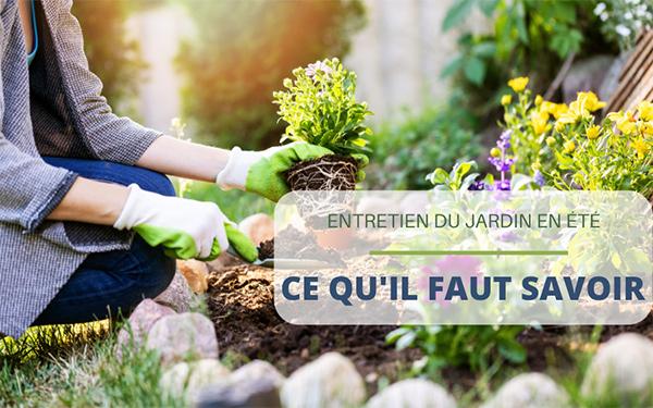 Entretien du jardin en été : ce qu'il faut savoir